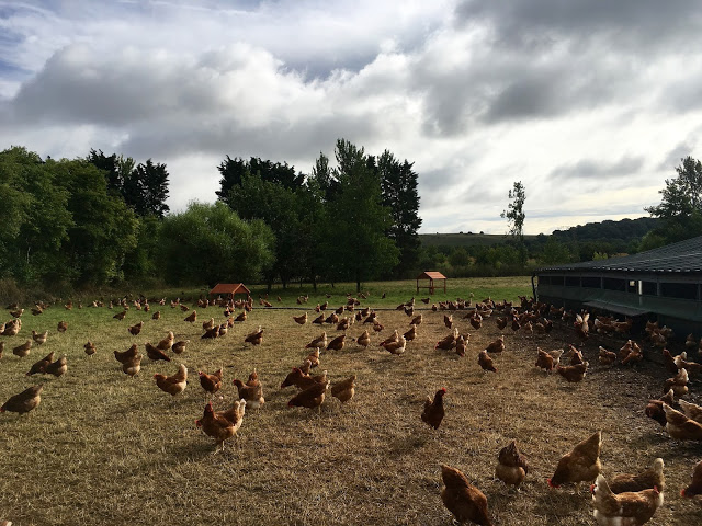 Free range chickens at Bulborne Farm