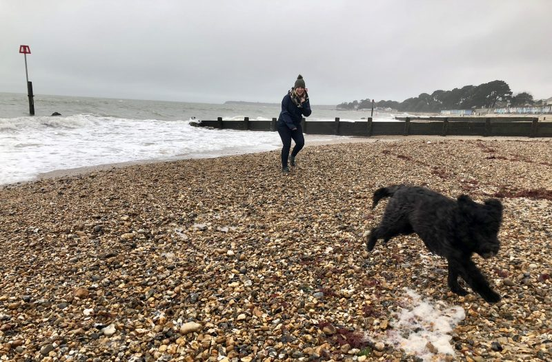 Dog running on a cold beach